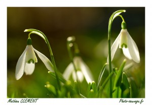 photo fleurs au printemps en macrophoto